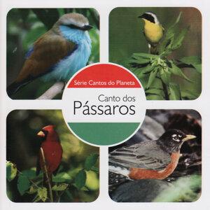 Canto Dos Pássaros