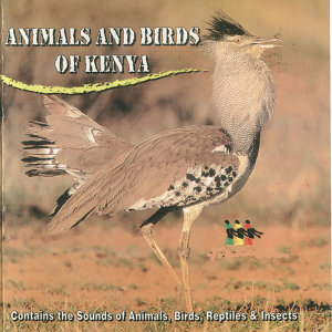 Animals and Birds of Kenya
