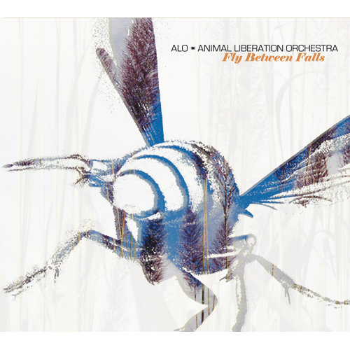 Fly Between Falls - Int'l Version
