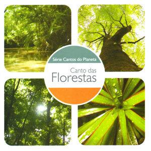Canto das Florestas
