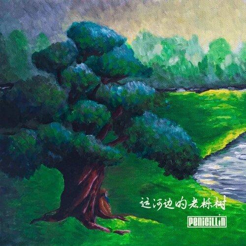 運河邊的老櫟樹