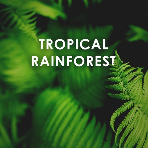 Calming Forest - Tropical Rainforest: Calm Down and Relax