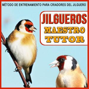 Jilgueros Maestro Tutor. Método de Entrenamiento Para Criadores del Jilguero. Carduelis Carduelis