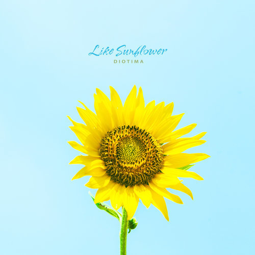 Like Sunflower