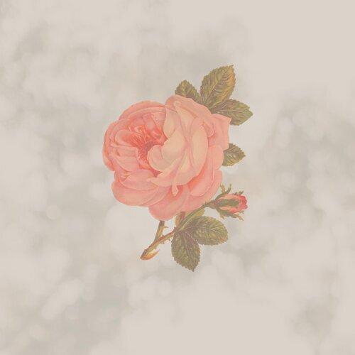 Chelsea's Rose
