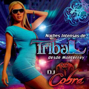 Noches Intensas De Tribal Desde Monterrey