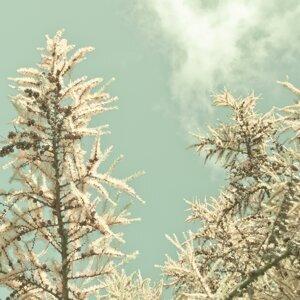 Warm Season