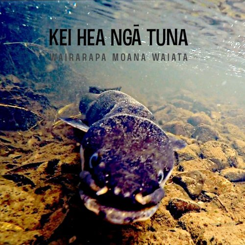 Kei hea ngā tuna