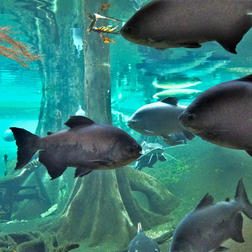 Deep Underwater Sounds from Exotic Amazonian Flooded Forest