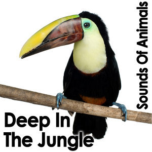 Sounds of Animals: Deep in the Jungle