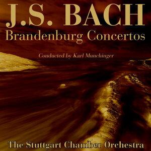 Bach: Brandenburg Concertos 1, 3 & 6
