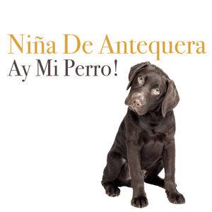 Ay Mi Perro!
