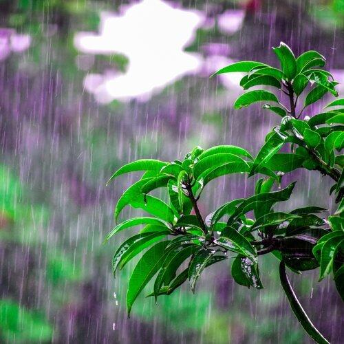 35 Best Nature Sounds for Better Sleep - Tropical Rain