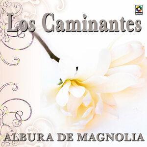 Albur De Magnolia