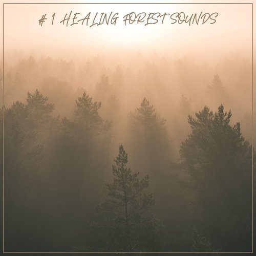 # 1 Healing Forest Sounds