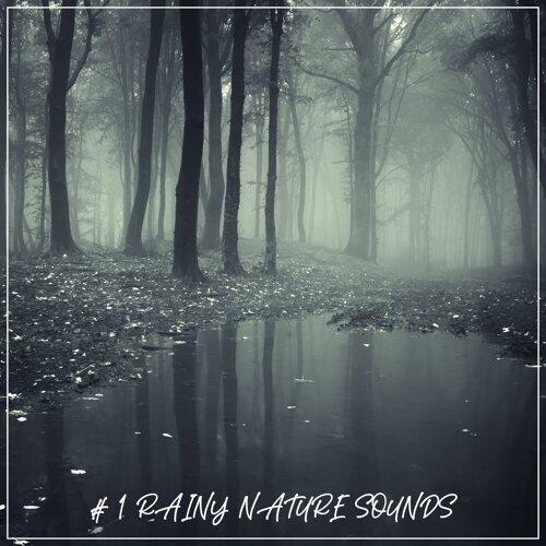 # 1 Rainy Nature Sounds