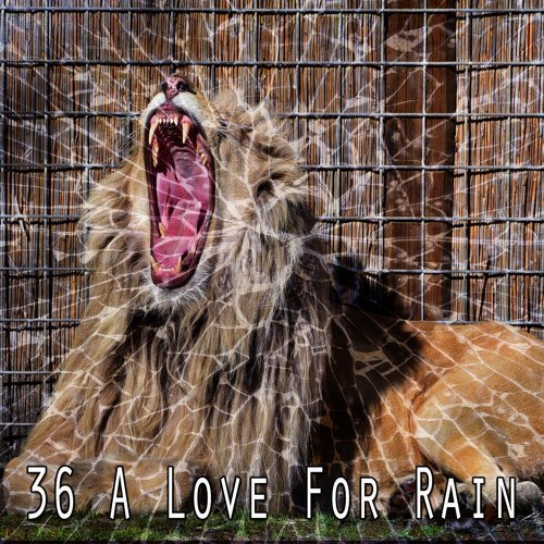 36 A Love for Rain