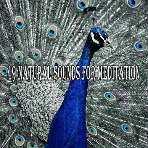 49 Natural Sounds for Meditation