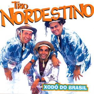 Xodó Do Brasil