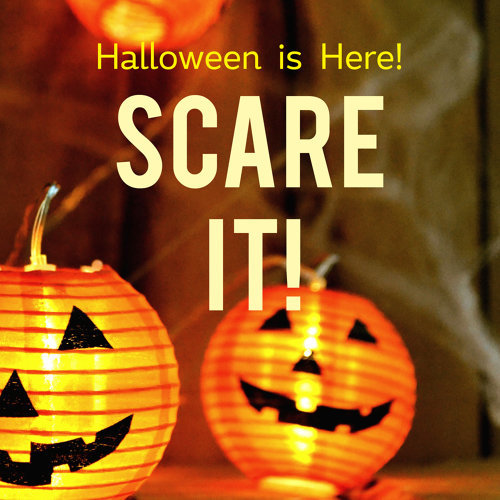 Scare It! Halloween is Here!