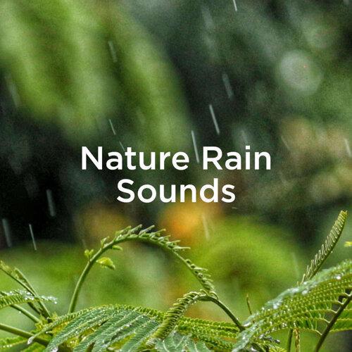 Nature Rain Sounds