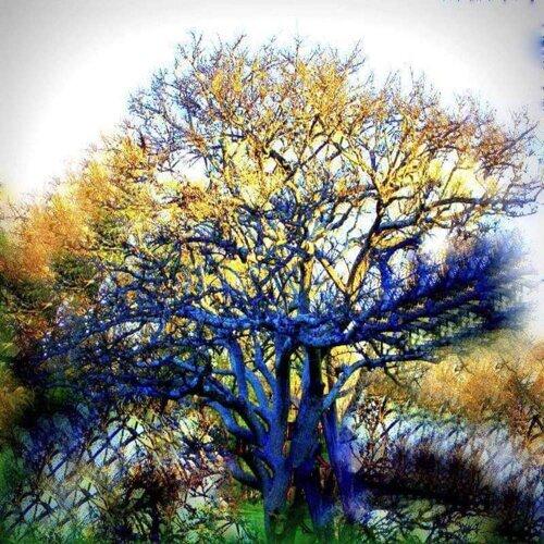 Branches (Original Score)