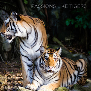 Passions Like Tigers
