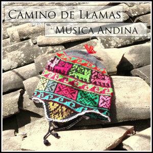 Camino de Llamas - Musica Andina