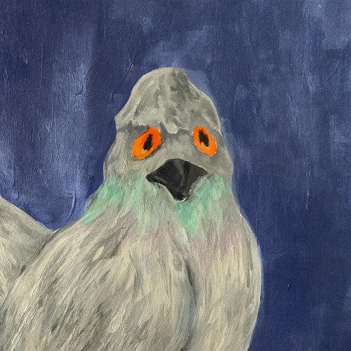 Pigeon 비둘기