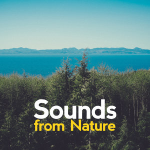 Sounds from Nature