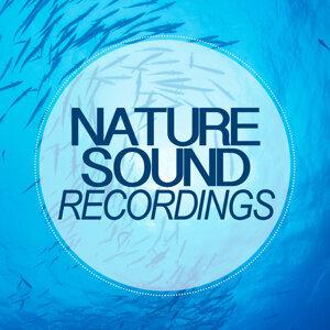 Nature Sound Recordings