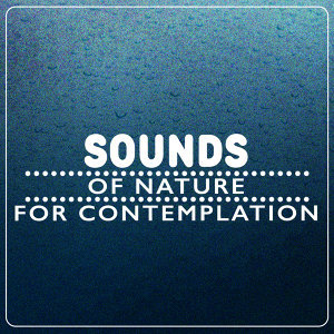 Sounds of Nature for Contemplation
