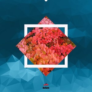 Basslover EP