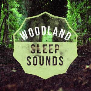 Woodland Sleep Sounds
