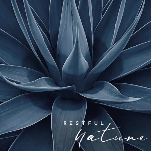 Restful Nature: Calm Down with Tranquil Melodies of Relaxing Music, Loosen Up, Feel The Soothing Influence of Nature