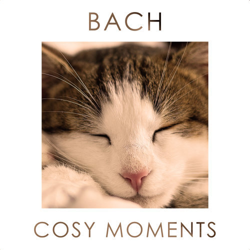 Bach Cosy Moments