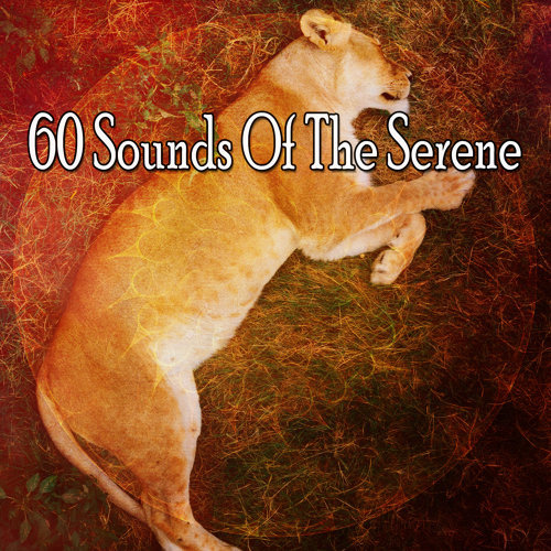 60 Sounds Of The Serene
