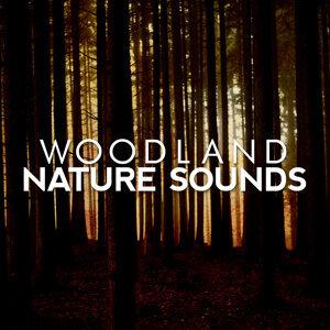 Woodland Nature Sounds