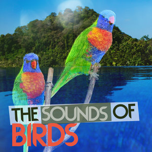 The Sounds of Birds