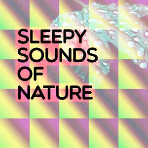 Sleepy Sounds of Nature