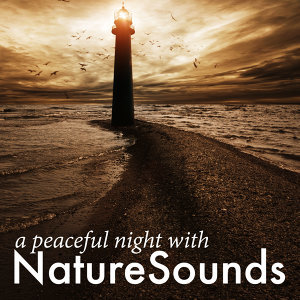 A Peaceful Night with Nature Sounds