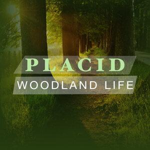Placid Woodland Life
