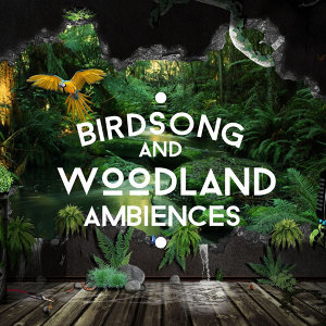 Birdsong and Woodland Ambiences