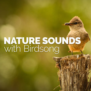 Nature Sounds with Birdsong
