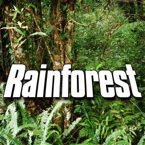 Rainforest (Nature Sound)