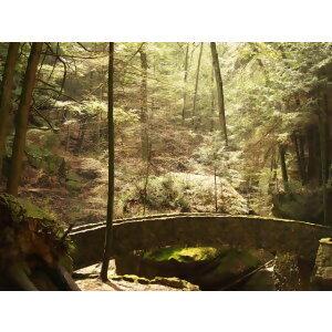 開放大自然8