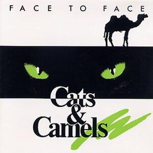 Cats & Camels