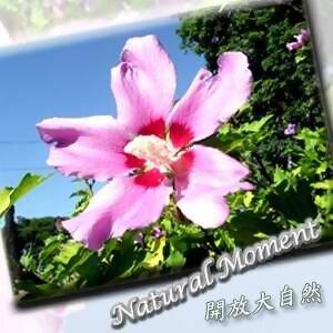 開放大自然10