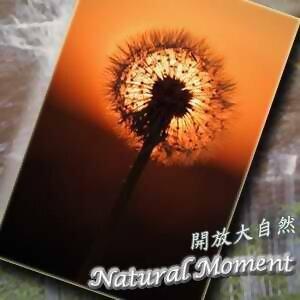 開放大自然13