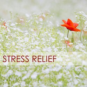 Stress Relief - Calming Your Anxious Mind with Sounds of Nature Music